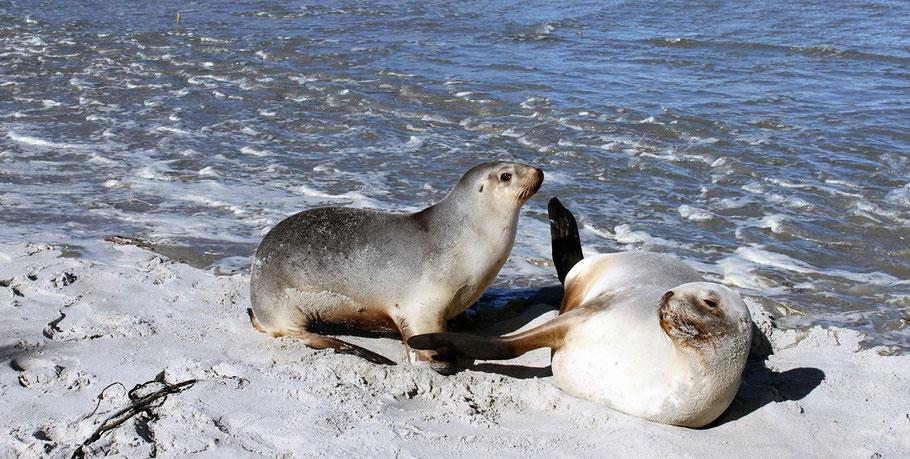Seelöwenmutter und ihr Junges, Neuseeland (c) Salomé Weber