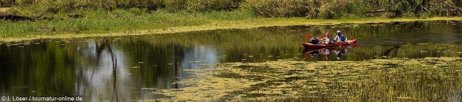 Mit dem Kajak durch den Biebrza Nationalpark, der Amazonas Polens und Europas
