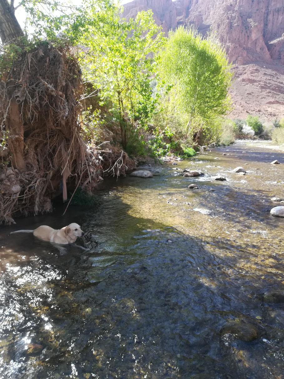 Das erste Süßwasser-Bad seit langer Zeit, das spült den Dreck aus dem Pelz...