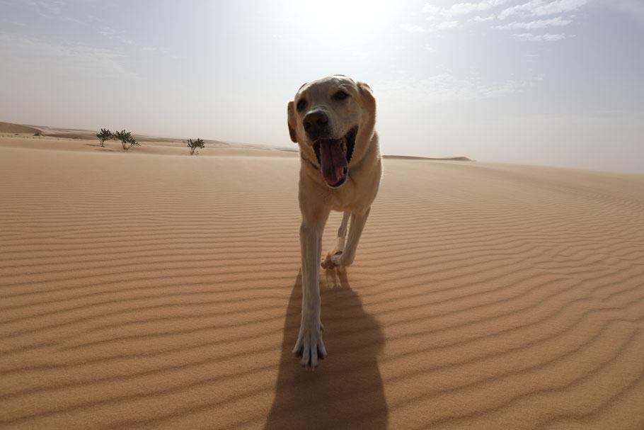 Aisha findet es auch Mega endlich wieder im Sand zu sein