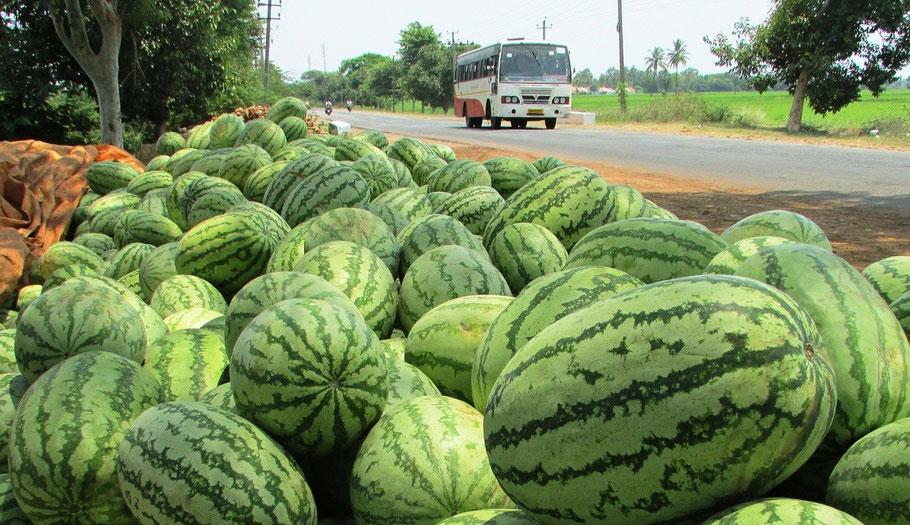 Bild: Wassermelone, Citrullin Malat