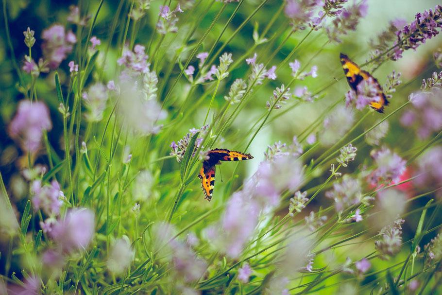 Landschaftsbau Gartenpflege Gartengestaltung Gartenarbeiten in Frankfurt, Bad Homburg und Umgebung