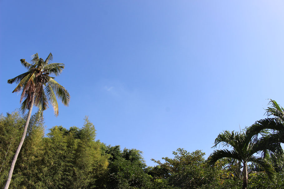 From a pool lounger, you can see coconut trees and high sky