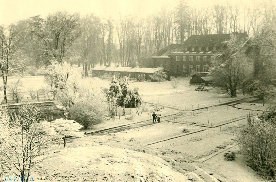 Garteninspektor Georg Ludewig Dienstzeit (1913-1947) mit Enkel Wolfgang Göbel - Foto F. Wegener 10.12.1950