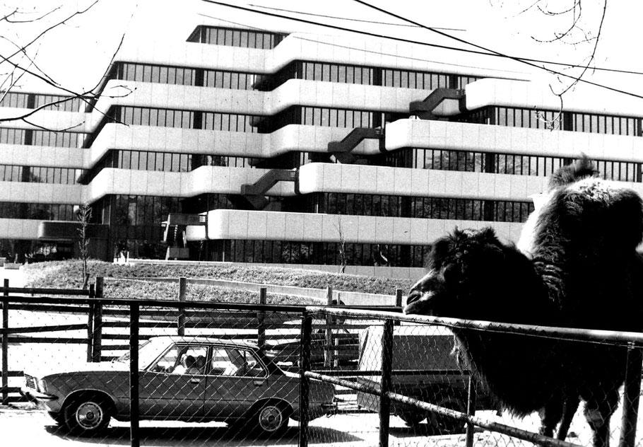 Der Umzug der Tiere etwa Ende 1973 - Der Bankneubau ist vor der Fertigstellung - Foto LBS