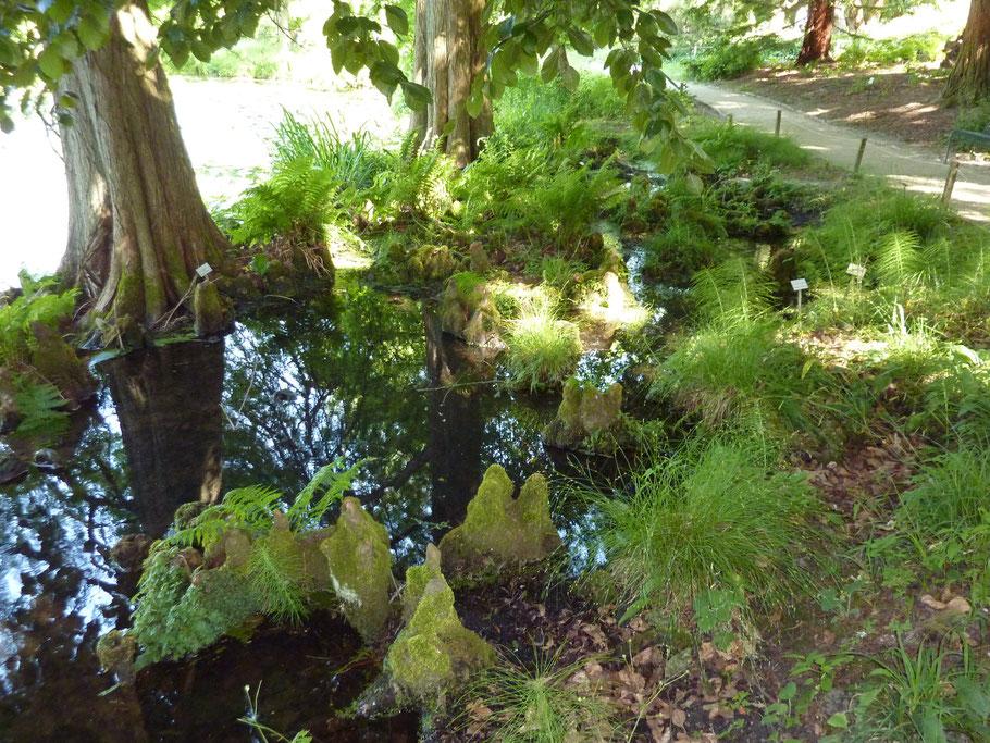 Idylle am Rande des Teichs