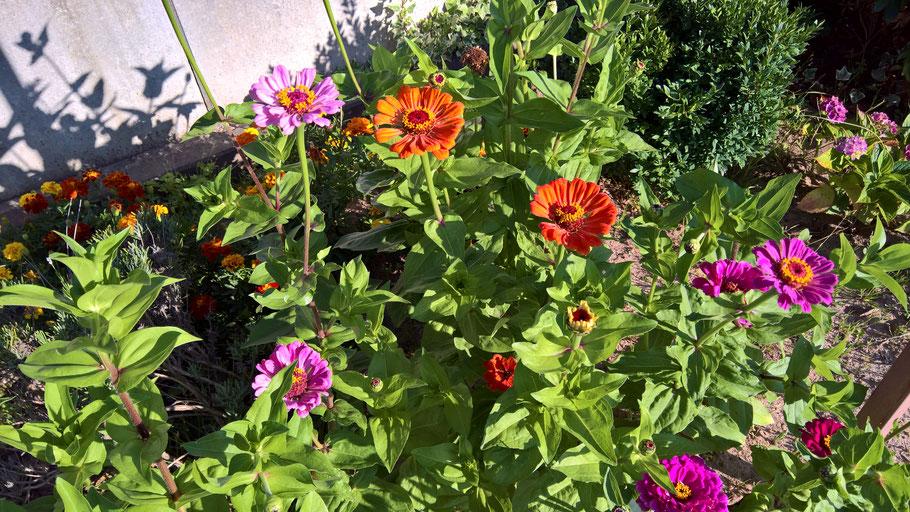 schöne Gartenblumen