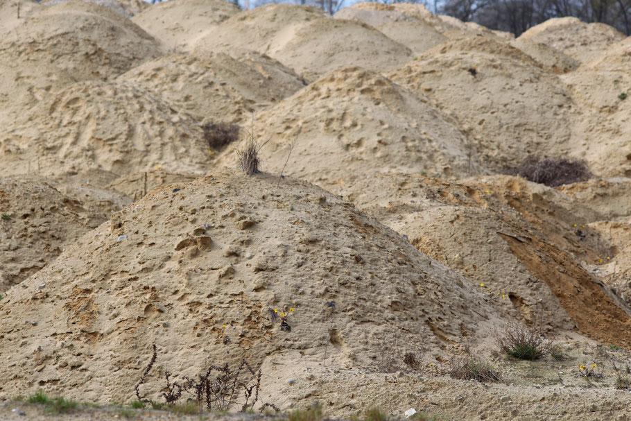 Sand Versiegelung Billwerder Oberbillwerder Bergedorf