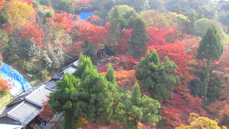 Fall colours in Kyoto.