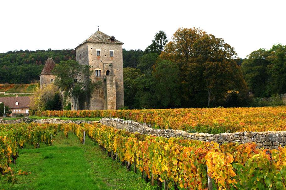 Châteaux médiéval de Gevrey-Chambertin et son Vignoble
