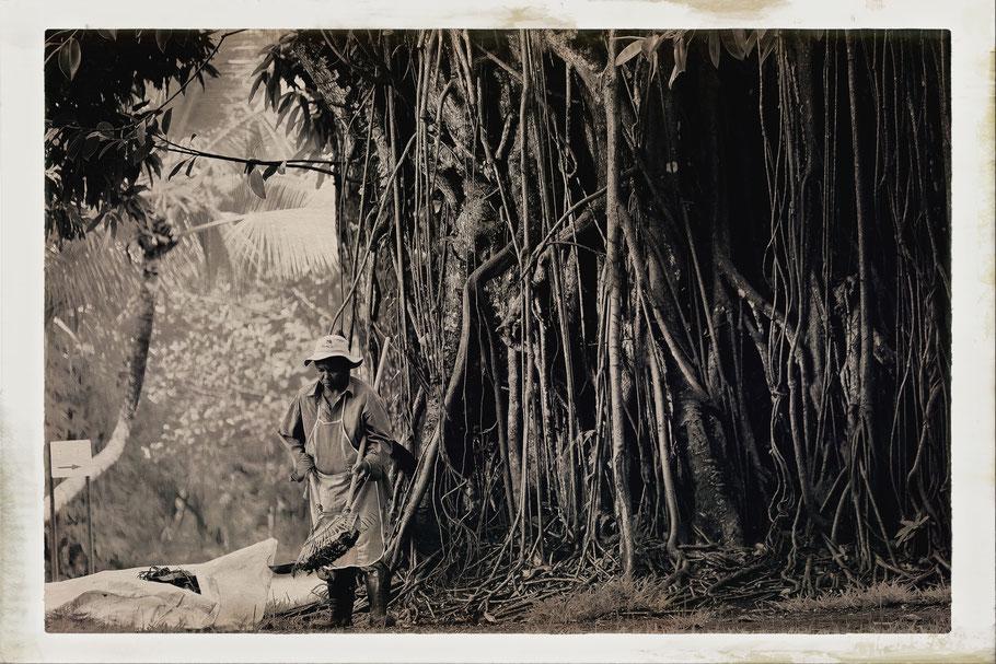 Mauritius Sir Seewoosagur Ramgoolam Botanical Garden