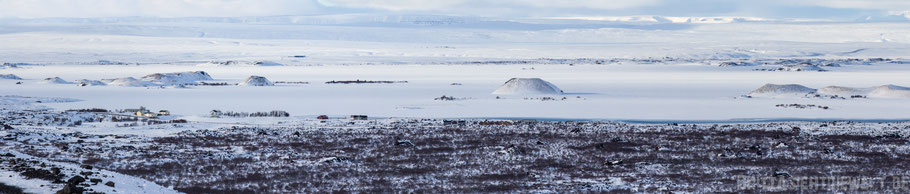 Hverfjall,Hverfell,iceland,tipps,car,winter,february,north,myvatn,Panorama,view