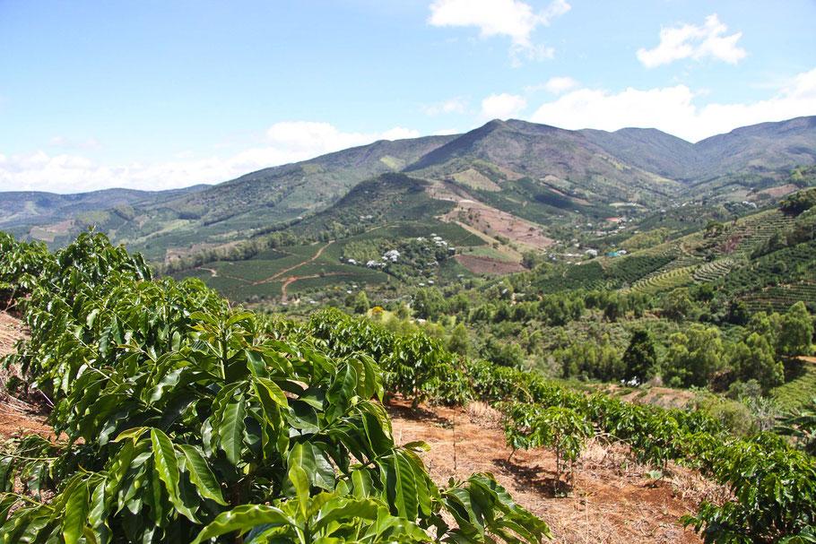 Ernte Plantage Kaffee Brasilien Direkthandel Qualität