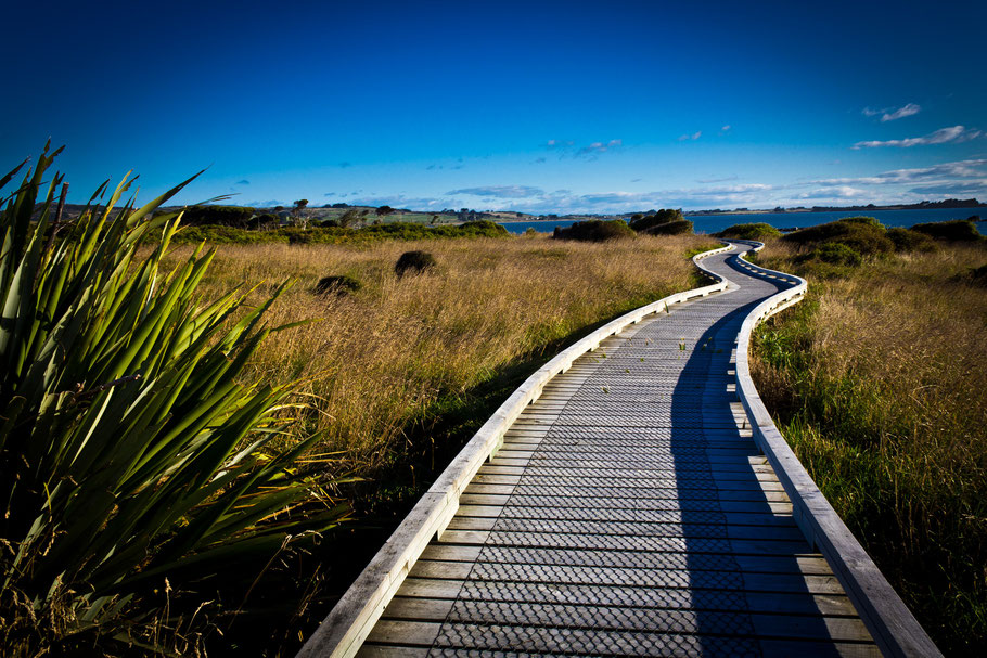 New Zealand pathway photography