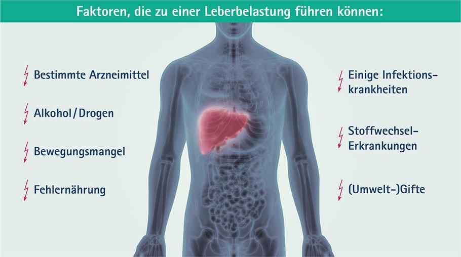 Illustration: Faktoren, die zu einer Leberbelastung führen können