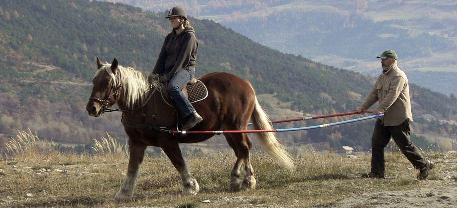 éducation, âne, chevaux de trait