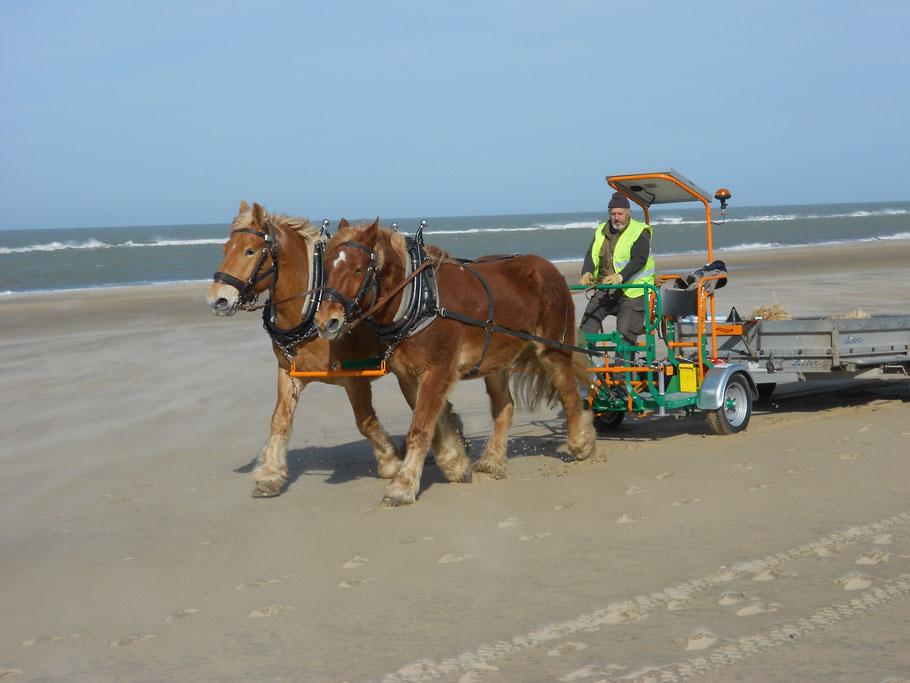 débardage, plage, estuaire, chevaux de trait, saint Thomas de conac, vitrezay