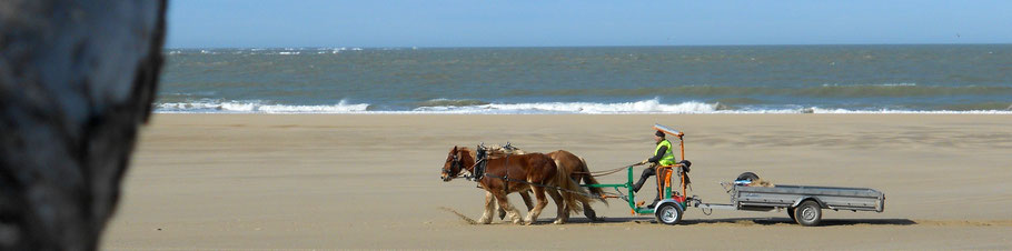 chantier, plage, débardage, estuaire, gironde, Charente, alternative animale,