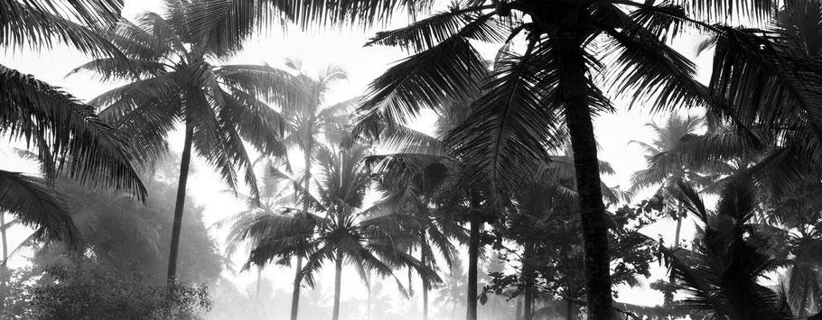 Palmen frühmorgens im Nebel am Marari Beach, Indien, in schwarz-weiß als Panorama-Photographie