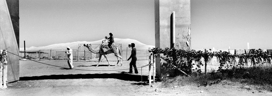 Junge Familie reitet auf Kamel in Al Ramool in der Nähe von  Dubai als Panorama-Photographie
