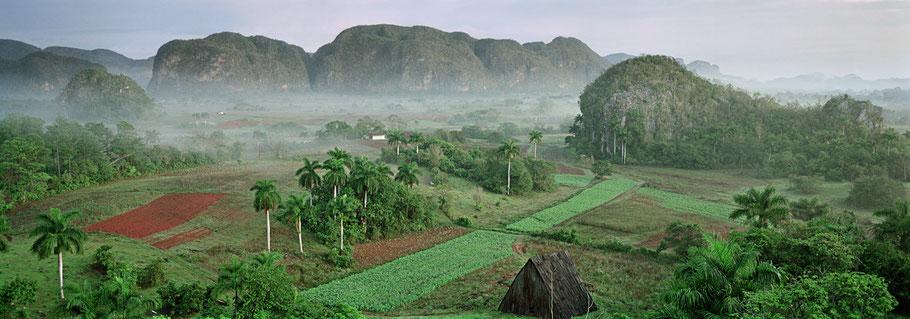Das Valle De Vinales in Cuba früh am Morgen als Farbphoto im Panorama-Format