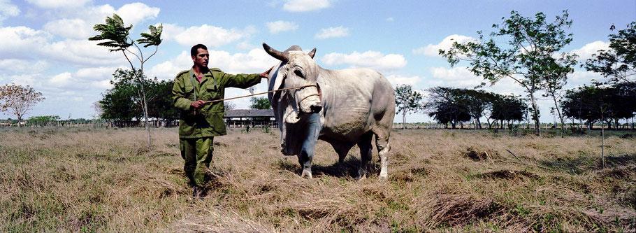 Kubanischer Züchter zeigt seine Tiere in Las Tunas, Farbphoto als Panorama-Photographie