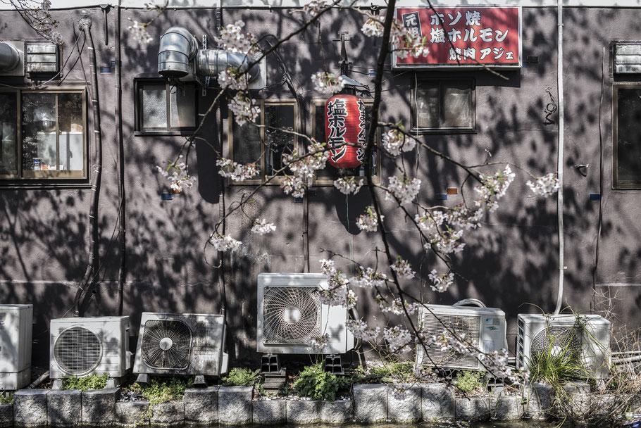 Kirschblüten und Bach im Zentrum von Kyoto als Farb-Photographie, Japan