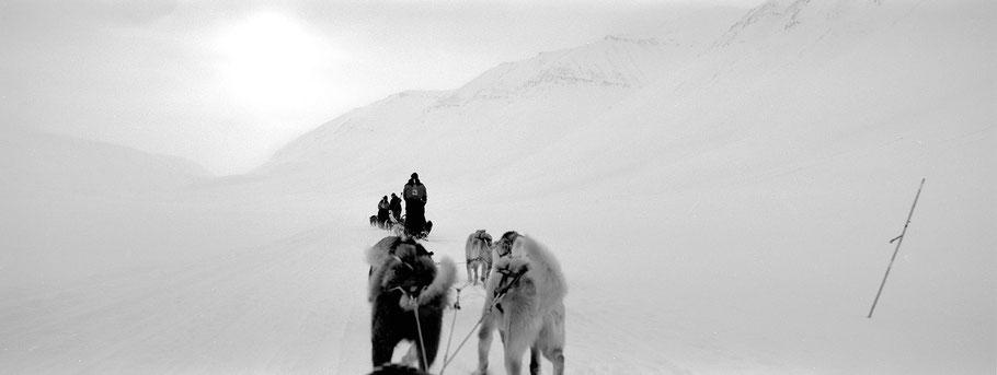 Schlittenhunde auf Spitzbergen - Svalbard in schwarz-weiß als Panorama-Photographie