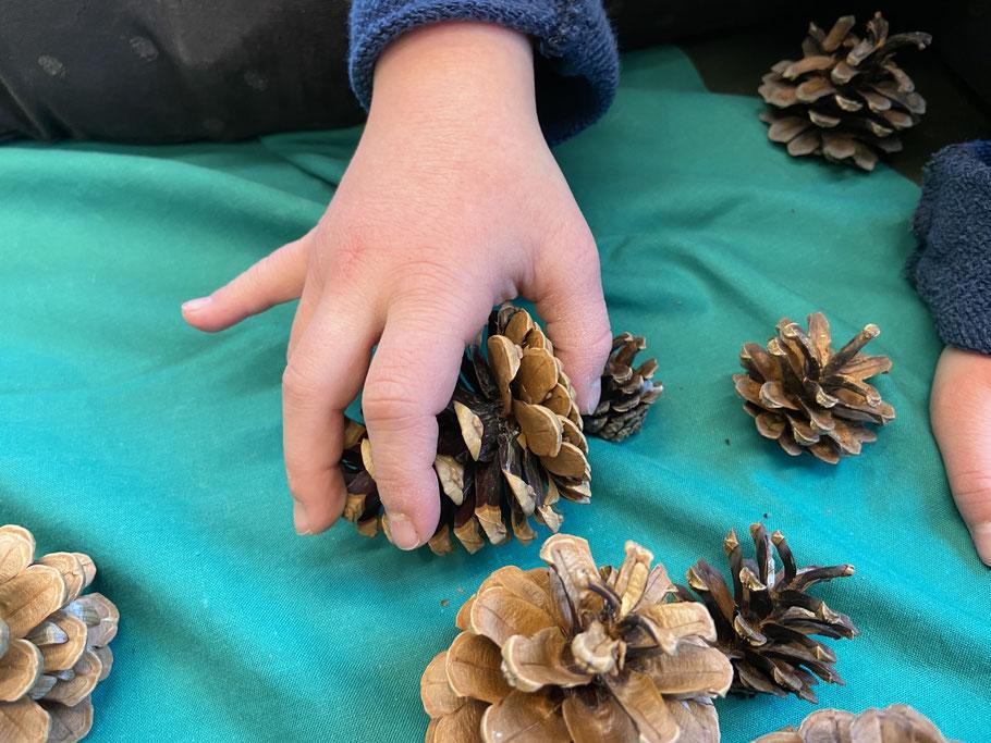 Kinderhand ergreift einen Föhren-Zapfen