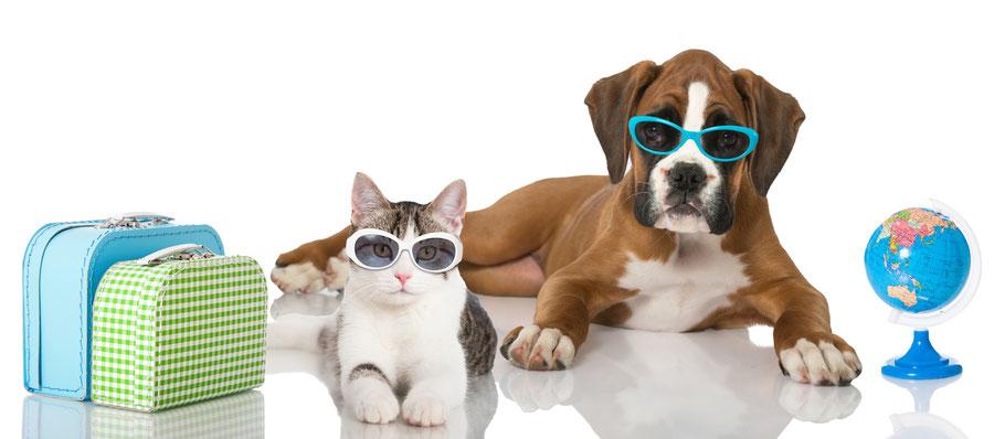 Pet travel scheme and pet passports polmont vet.