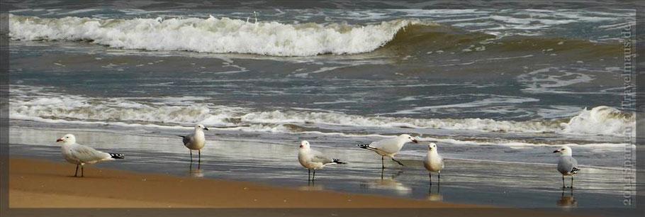 Morgens um 10 Uhr am Strand von Miramar...