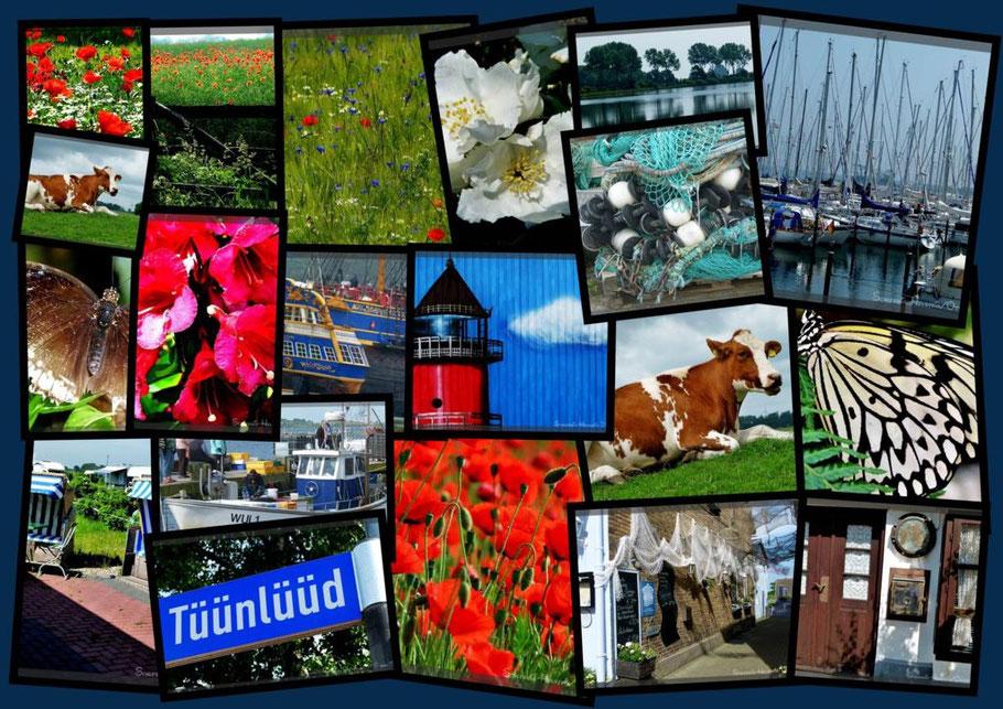 Klick an für die Fotoshow (40 Fotos)