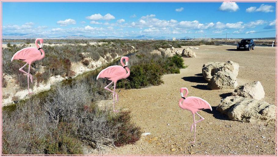 ...nur eine Fotomontage  mit Flamingos!