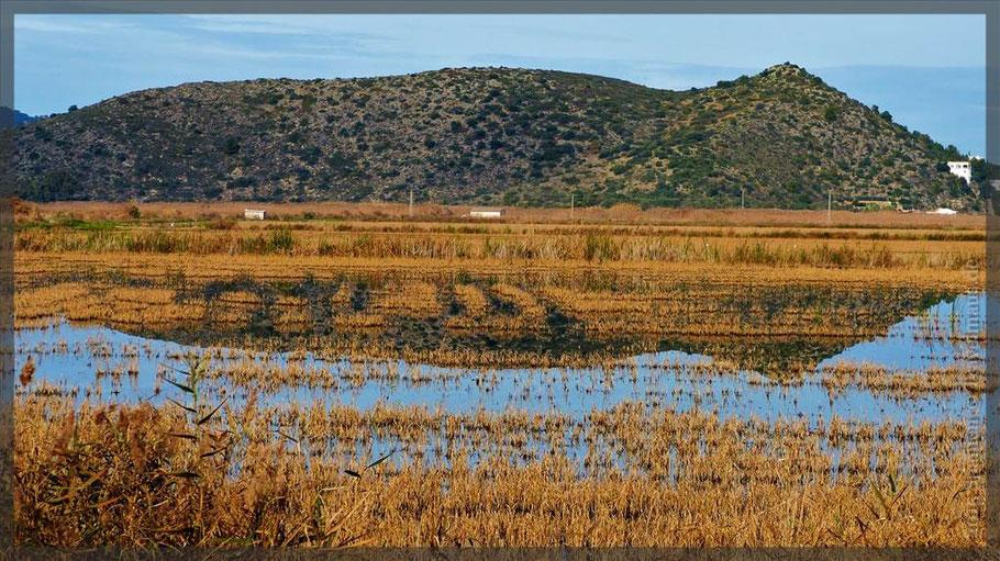 Reisfelder auf dem Weg nach Pego