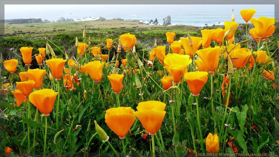an der Big Sur, Westküste USA
