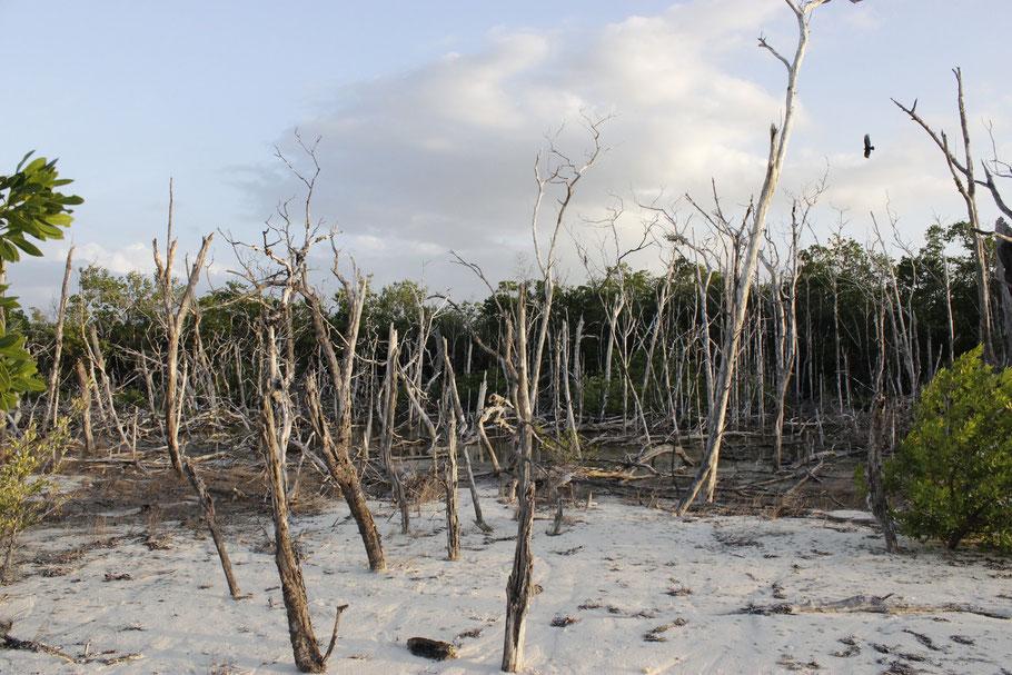 Une petite plage, seul espace que la mangrove daigne nous laisser