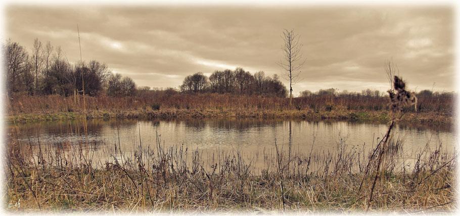 Ein Teich an einem trüben Wintertag