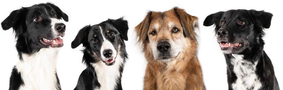 sniffles - Die Bettwanzen-Spürhunde, Buck, Lila, Leo und Leni (von links nach rechts)