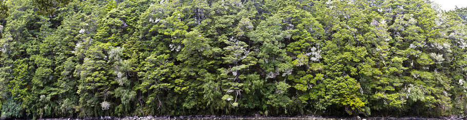grüne Wildniss