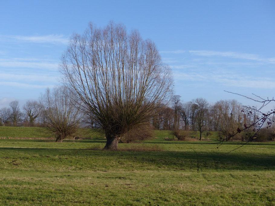 Weil es gestern am Himmelgeister Rheinbogen so schön war noch eine Zugabe