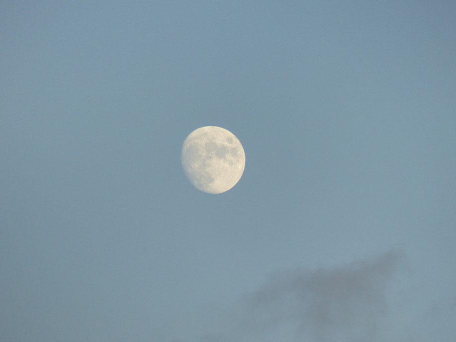 Heller Mond über dunklem Wald