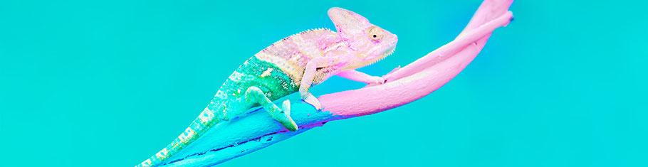 Chamäleon auf unterschiedlich farbigem Ast passt sich gerade dem Ast an. Veränderungen auf Ihre persönliche Art meistern.