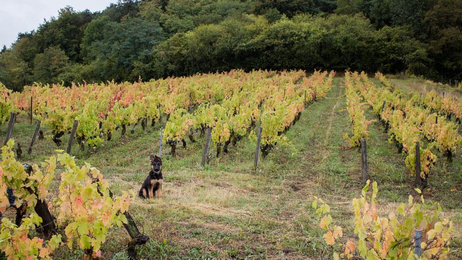 Côtes de Toul Vin L'Arbre Viké Jan Tailler Katya Berrien