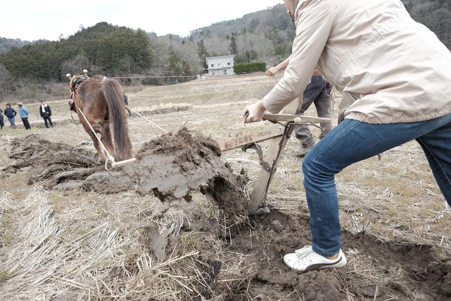 馬耕による田おこし