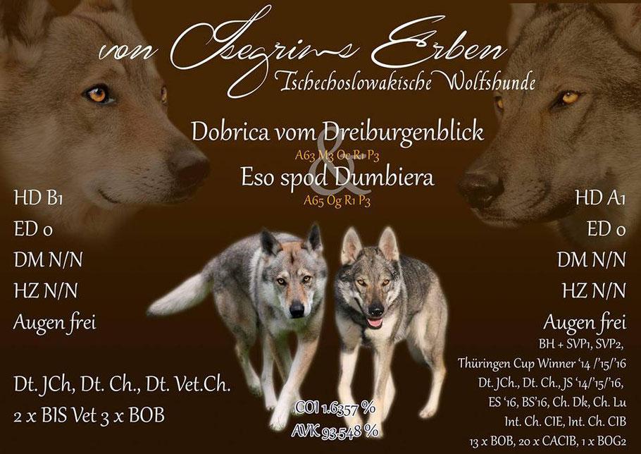 Welpen tschechoslowakischer Wolfshund Wolfhund Züchter Hundewelpen