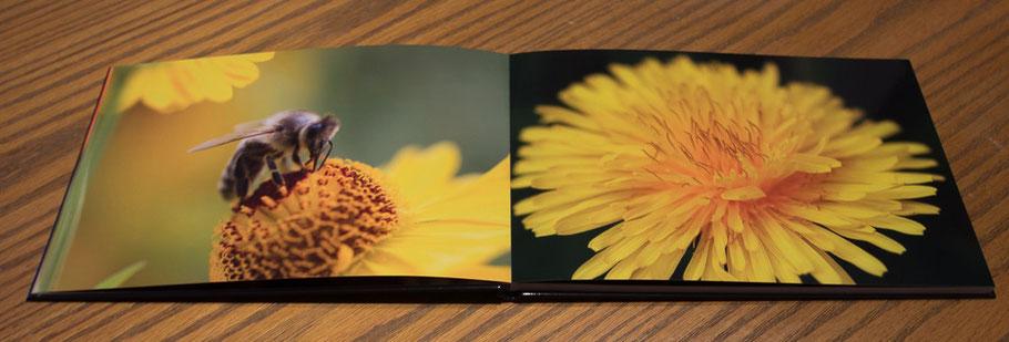 www.marcs-fotografieseite.de, Marc Eggelhöfer, Saal Digital, Fotobuch, 2014/2015, Blumen, Holzmusterung, cool