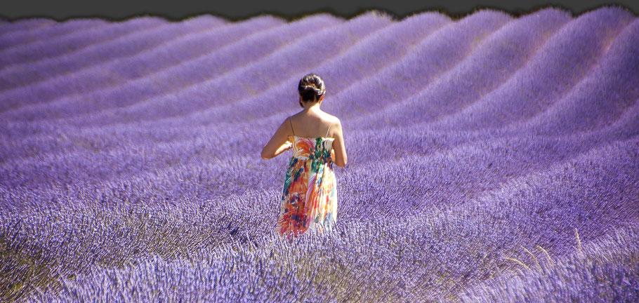 belle femme asiatique au milieu d'un champs de lavandes à saint jean de sault photographe herve raynaud