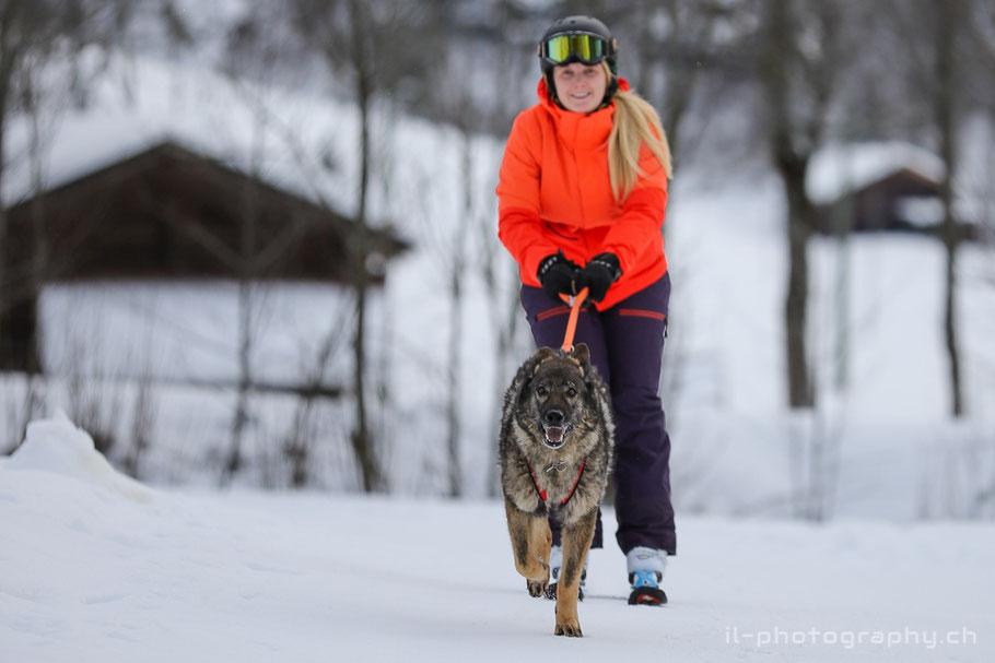Hundefotografie im Schnee auf dem Männlichen.