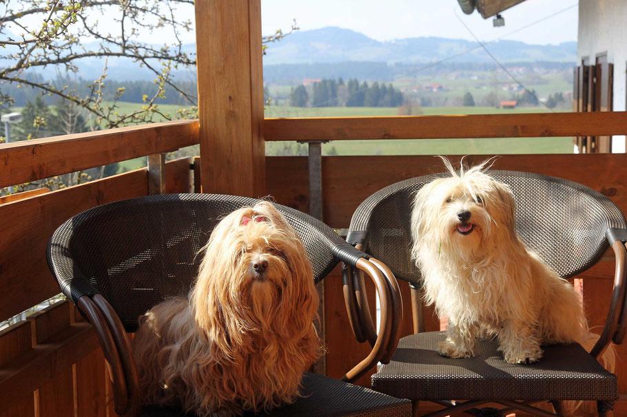 Tami und Bella genießen die Frühlingssonne