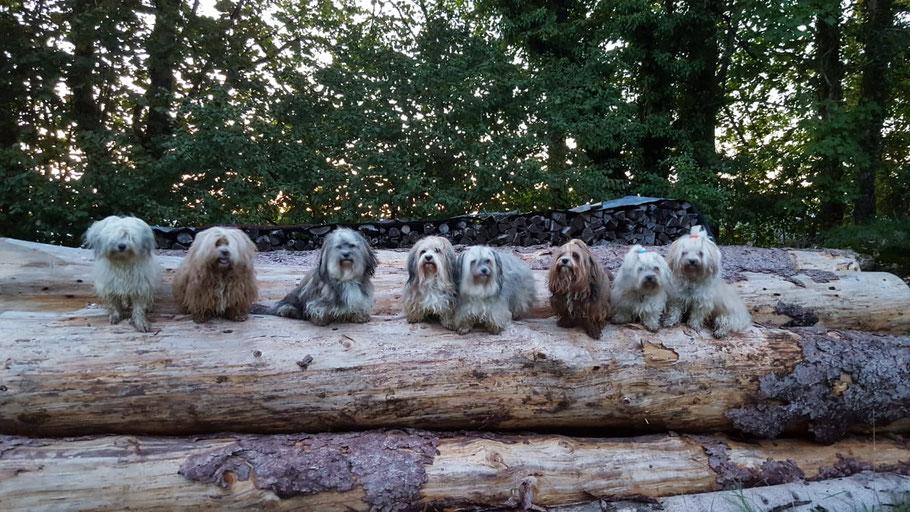 Tami, Bella, Mama Frieda, Smilla, Oma Gundi, Emil, Bruder Hugo, Gonzo